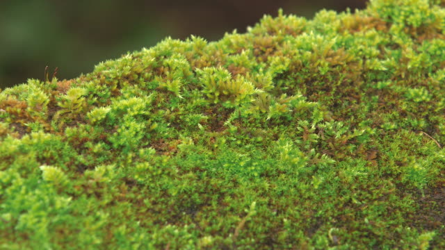cu shot of sandstone with moss / freudenburg, rhineland palatinate, germany - moss stock videos & royalty-free footage