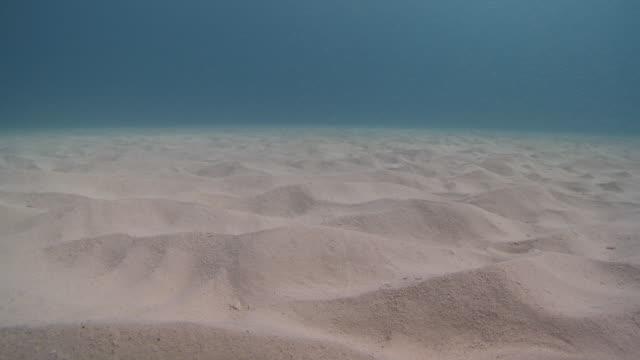 vídeos y material grabado en eventos de stock de ms zi shot of sandy sea bed / playa del carmen, isla mujeres, mexico - playa del carmen