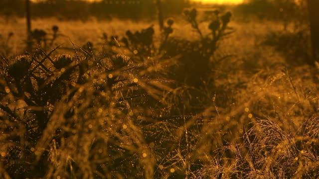 CU R/F Shot of Scrub dusk / Werribee, Victoria, Australia