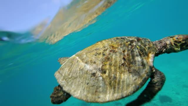 vídeos y material grabado en eventos de stock de cu ts shot of sea turtle / praslin, seychelles - seychelles