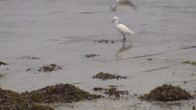 vídeos y material grabado en eventos de stock de cu shot of seagull - cuatro animales