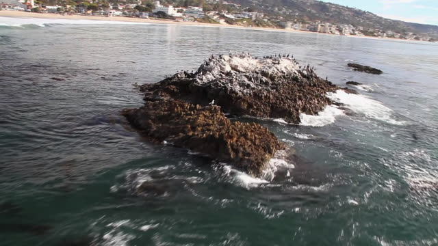 ms aerial pov shot of seagulls and pelicans birds on rock taking flight over ocean / laguna beach, california, united states - laguna beach california stock videos & royalty-free footage