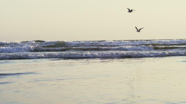 stockvideo's en b-roll-footage met ms pan slo mo shot of seagulls fly low over ocean waves / astoria, oregon, united states  - vier dieren