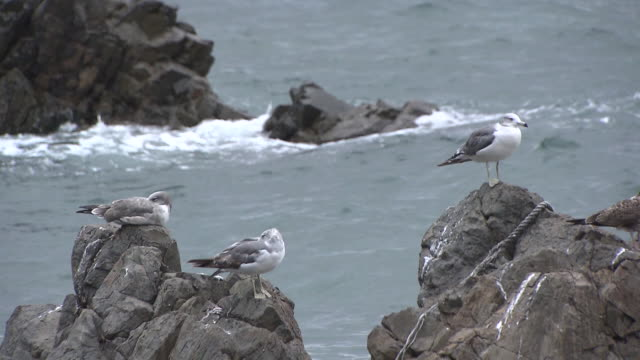 Shot of Seagulls sitting on Rocks