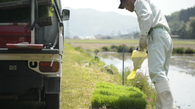 MS Shot of Senior man generation is work of rice planting / Toyooka, Hyogo, Japan