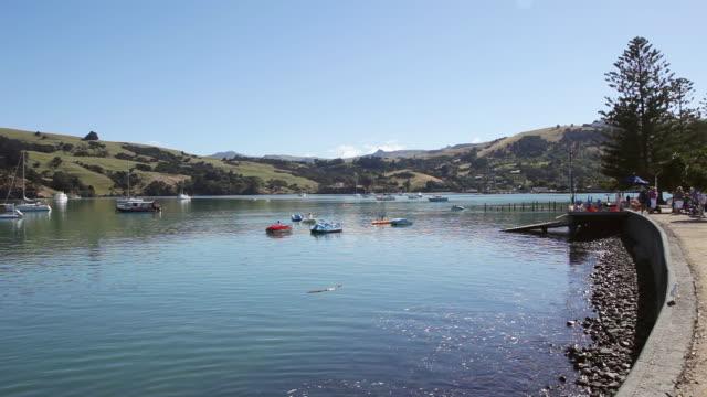 ms shot of shore of akaroa / akaroa, new zealand - akaroa stock videos & royalty-free footage