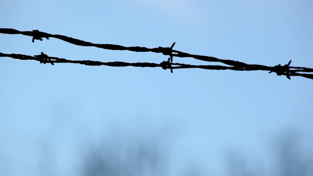 cu shot of silhouette of barbed wire / endicott, new york, united states  - barbed wire stock videos & royalty-free footage