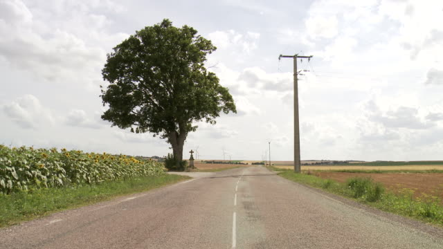 ms shot of single tree with roadside cross and sunflower field next to country road / beaune, burgundy, france - 道ばた点の映像素材/bロール