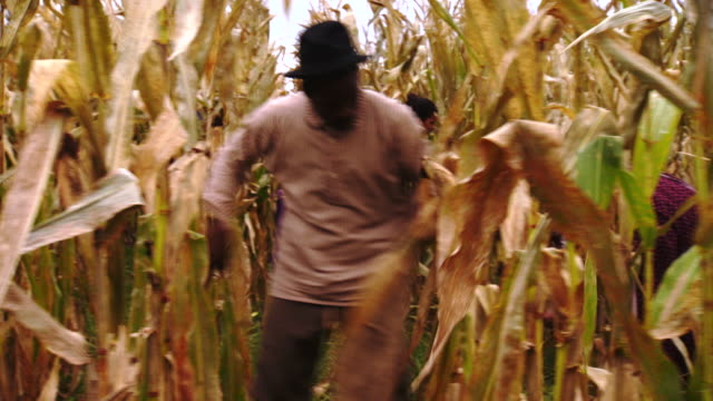 ms pov shot of slaves harvesting corn / culpeper, virginia, united states - the machine: master or slave stock videos & royalty-free footage