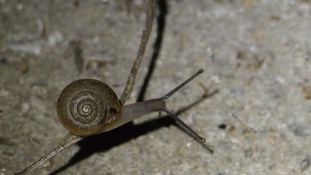 vídeos y material grabado en eventos de stock de shot of slow moving of snail - caracol
