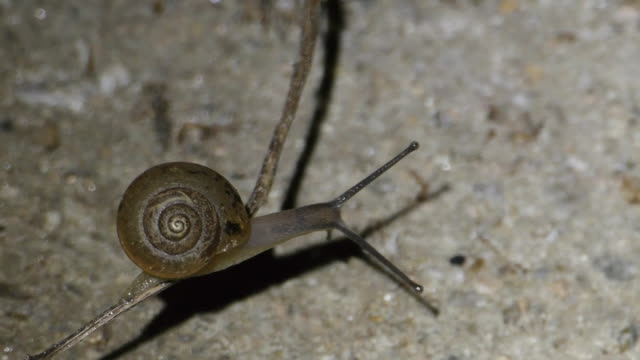 vídeos de stock e filmes b-roll de shot of slow moving of snail - snail