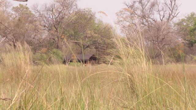 vídeos y material grabado en eventos de stock de ms shot of small house in distance with soft focus tall grass / bwindi, kabale, uganda - wiese