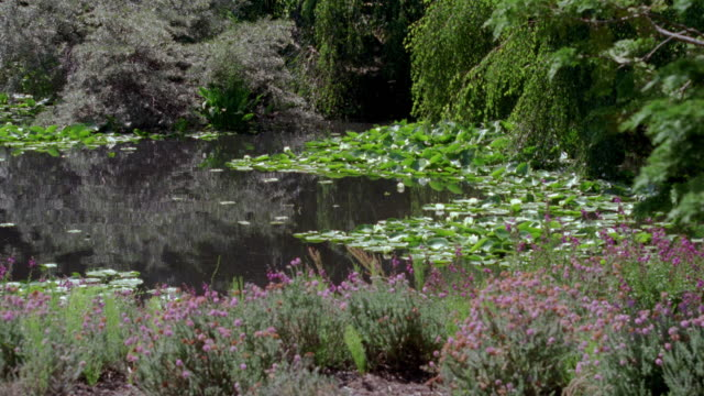ms shot of small pond - water plant stock videos and b-roll footage