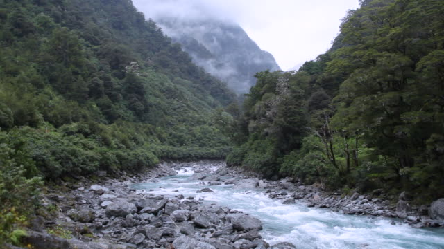 MS Shot of Small river on South Island / Dunedin, New Zealand