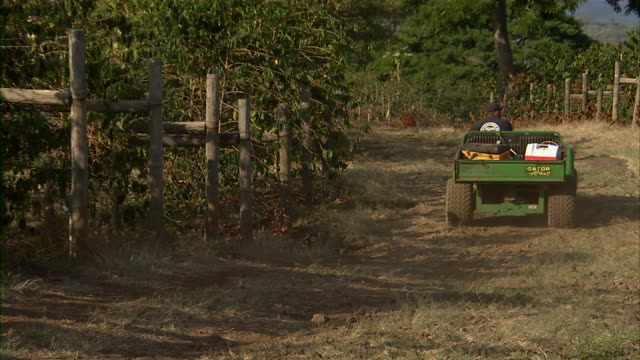 Shot of small tractor moving through coffee bean plantation.