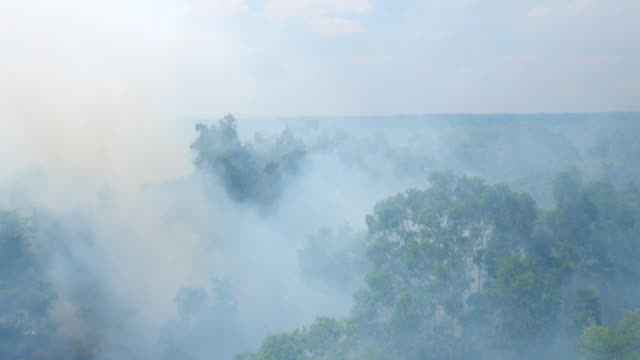 vidéos et rushes de shot of smoke-filled papua forest after fire - indonésie