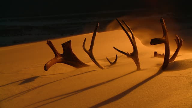 MS Shot of snow blowing around covered elk antlers at night / Arviat, Nunavut, Canada