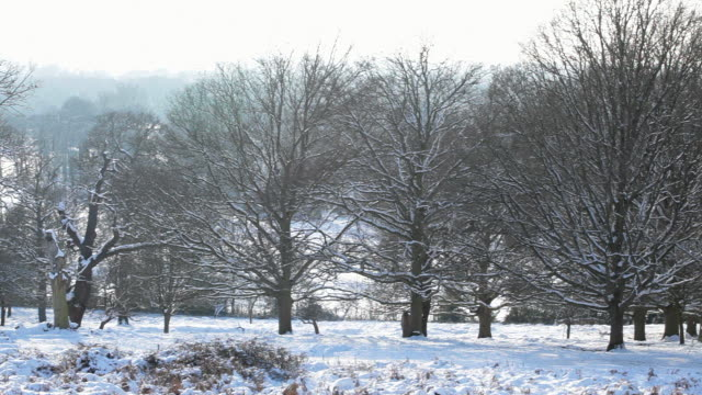 ws pan shot of snow cover trees in richmond park / london, united kingdom - peter snow stock videos & royalty-free footage