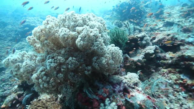 cu zo shot of soft coral / sipadan, semporna, tawau, malaysia - soft coral stock videos & royalty-free footage
