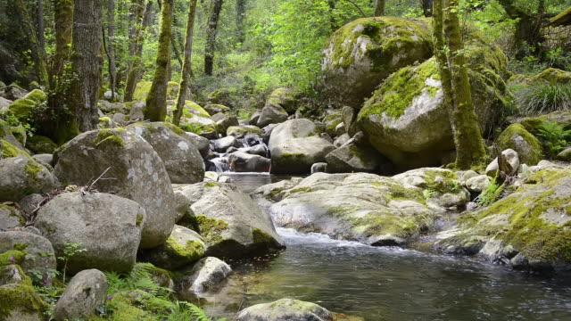 vidéos et rushes de ms shot of solenzara mountain rock river in forest / col de bavella, corsica, france - fleuve et rivière