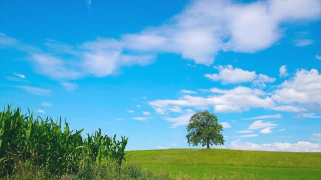 WS T/L Shot of solitary oak tree on hill / Wolfratshausen, Bavaria, Germany