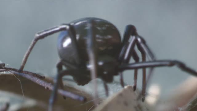 vídeos y material grabado en eventos de stock de cu shot of spider / cape winelands, western cape, south africa - cabo winelands