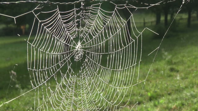 MS Shot of spiderweb with dewdrops / Nittel, Rhineland Palatinate, Germany