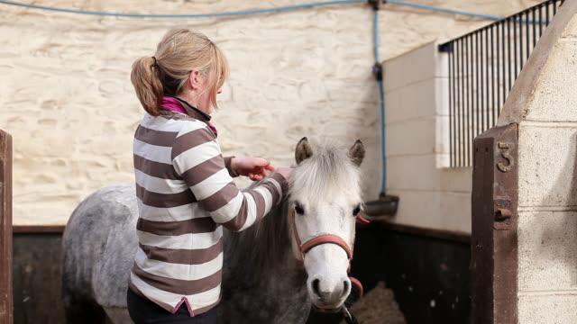 MS Shot of stable hand platting horse mane / Helland, Bodmin, Cornwall, United Kingdom