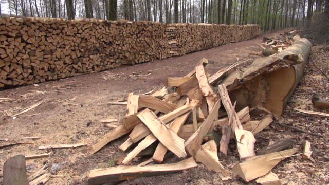 MS Shot of stacked firewood in forest / Orscholz, Saarland, Germany