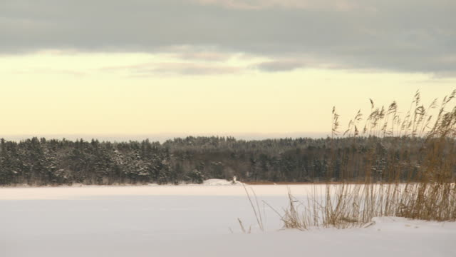 ws pan shot of stockholm countryside in snow / stockholm, fennoscandia, sweden - 30 seconds or greater stock videos & royalty-free footage