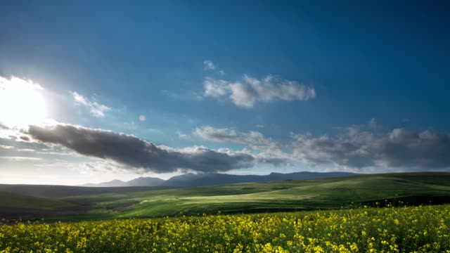 WS T/L Shot of Storms clouds passed over wheat and canola fields / Caledon, Western Cape, South Africa