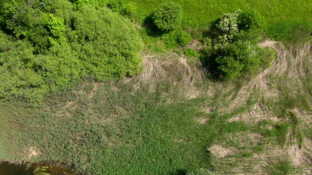 MS AERIAL Shot of stream in forest clearing / Wolfratshausen, Bavaria, Germany