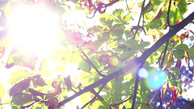 SLO Missouri photo du soleil qui pénètre à travers les feuilles