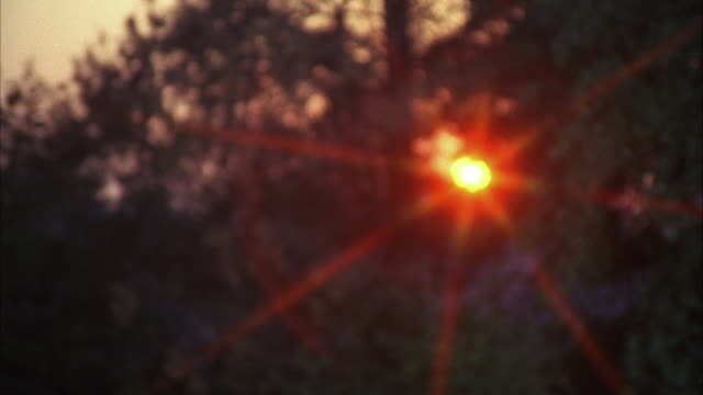ms zo zi shot of sun through trees / los angeles, california, united  - sagoma controluce video stock e b–roll