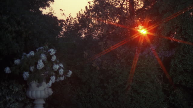 ms shot of sun through trees / los angeles, california, united  - solar flare stock videos & royalty-free footage