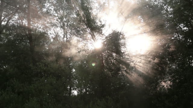 ms pan shot of sunlight coming out from trees with sky / swamp, virginia, united states - inquadratura dal basso video stock e b–roll