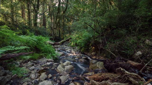 WS T/L Shot of Sunlight runs across creek in forest / Heidelberg, Western Cape, South Africa