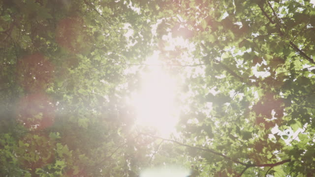 """cu pov la shot of sunlight through trees, green leaves / bristol, united kingdom"" - inquadratura estrema dal basso video stock e b–roll"
