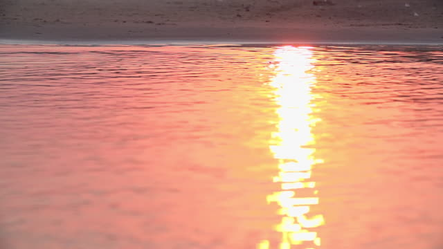 ms slo mo r/f shot of sunset reflection on river / kruger national park, mpumalanga, south africa - krüger nationalpark stock-videos und b-roll-filmmaterial