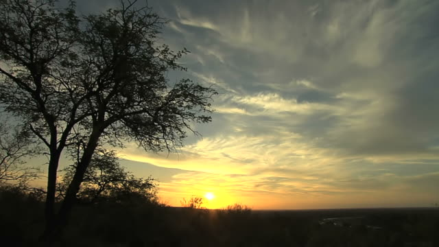 vídeos de stock e filmes b-roll de ws shot of sunset/sunrise - arbusto