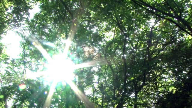 Shot of Sunshine and Spiderweb in a Forest