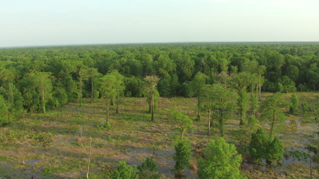 WS AERIAL TD Shot of swampy forest in Delta National Forest / Mississippi, United States