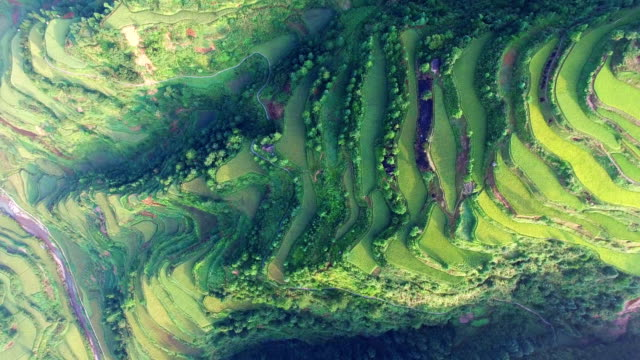 ws aerial shot of terrace field in morning,guizhou,china. - 30 seconds or greater stock videos & royalty-free footage