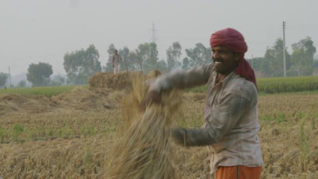 ms shot of thrashing / new delhi, india - farm worker stock videos & royalty-free footage