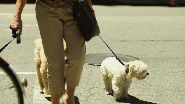 shot of three dogs with leads being led over a road in greenwich village, ny - 犬の散歩点の映像素材/bロール
