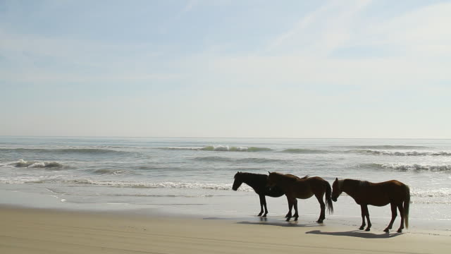 ws shot of three horses standing on beach waves rolling over beach / rodanthe, north carolina, united states - wiese stock videos & royalty-free footage