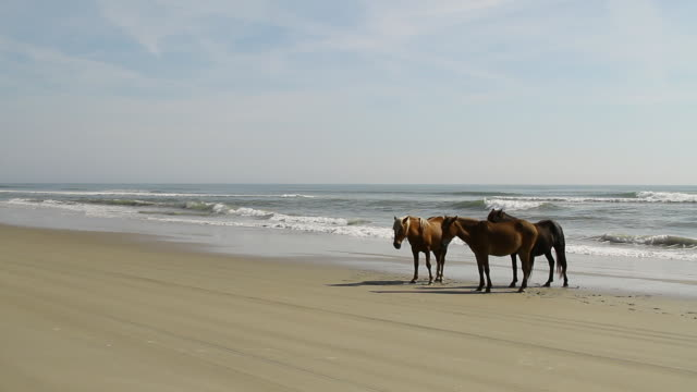 ws shot of three horses standing on beach with waves rolling on beach / rodanthe, north carolina, united states - north carolina beach stock videos & royalty-free footage