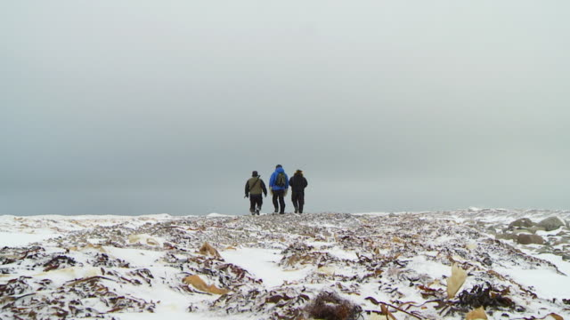 stockvideo's en b-roll-footage met ws shot of three men walking on frozen ground / arviat, nunavut, canada - wiese