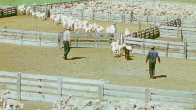 ws shot of three men's walking in lambs byre - nur männer über 30 stock-videos und b-roll-filmmaterial