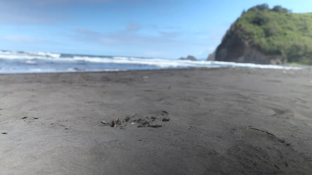 cu shot of tiny sea crab moving in and out of hole carrying sand on black sand beach in pololu valley with ocean in distance / waimea, hawall, big island, united states  - ハワイ島点の映像素材/bロール